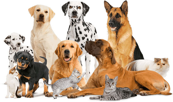 Mascotas Faunaplus